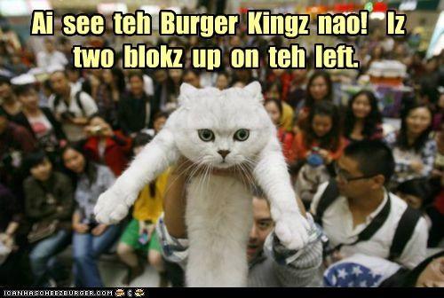 Cheezburger Image 5371346944