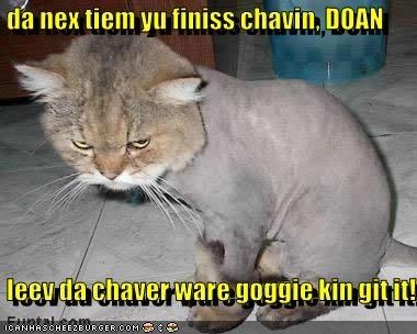Cheezburger Image 5371545088
