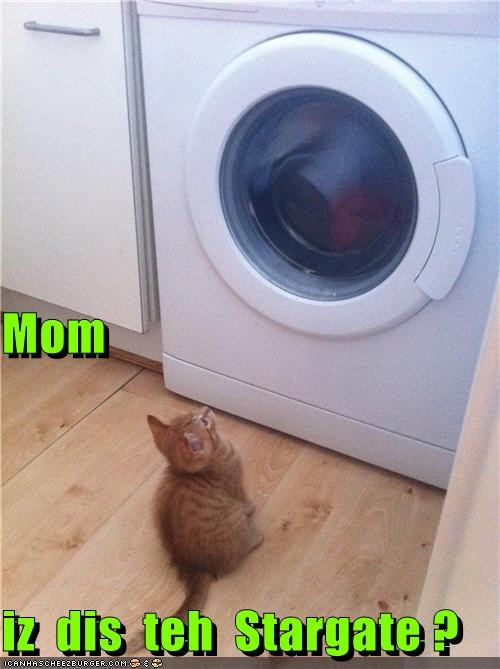 caption captioned cat Hall of Fame is kitten mom question Stargate this washing machine - 5372006144