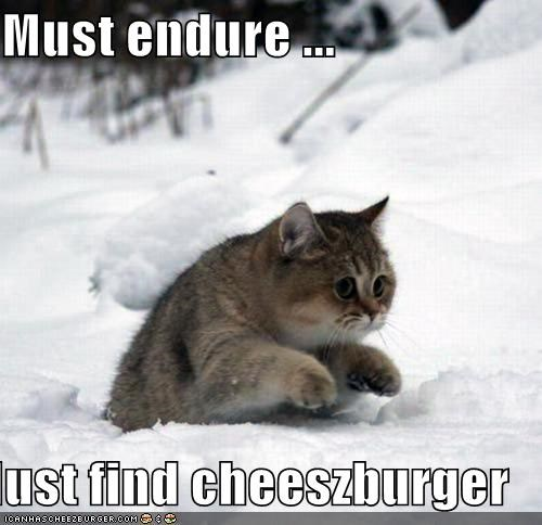 Cheezburger Image 5372215040