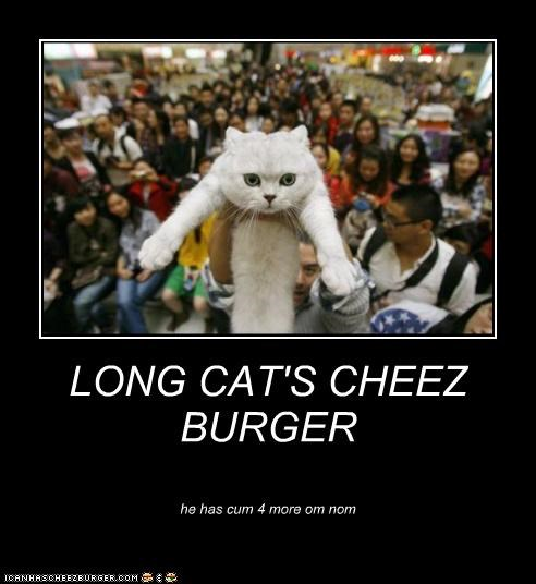 Cheezburger Image 5372307456