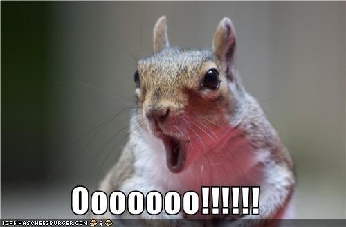 awe caption captioned ooh shock shocked squirrel - 5372589312