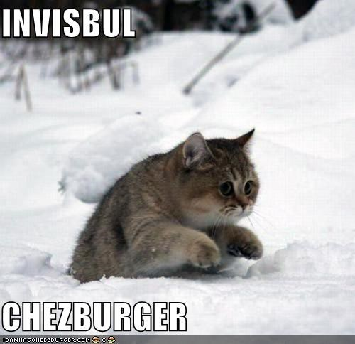 Cheezburger Image 5372966400