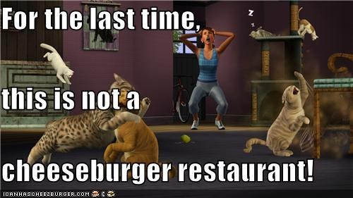 Cheezburger Image 5374286336