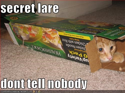 box cat dont tell Hall of Fame hidden hide hiding I Can Has Cheezburger secret lair shhh - 5374432512