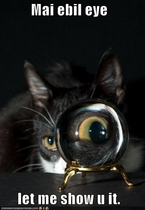 caption captioned cat evil eye it let magnification me my show Staring you - 5375622656