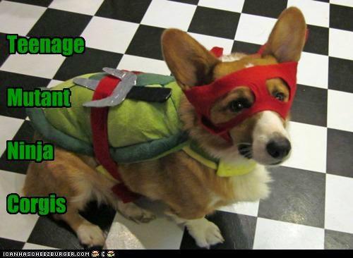 Cheezburger Image 5376672768