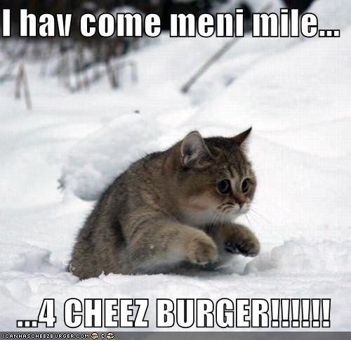 Cheezburger Image 5377407744