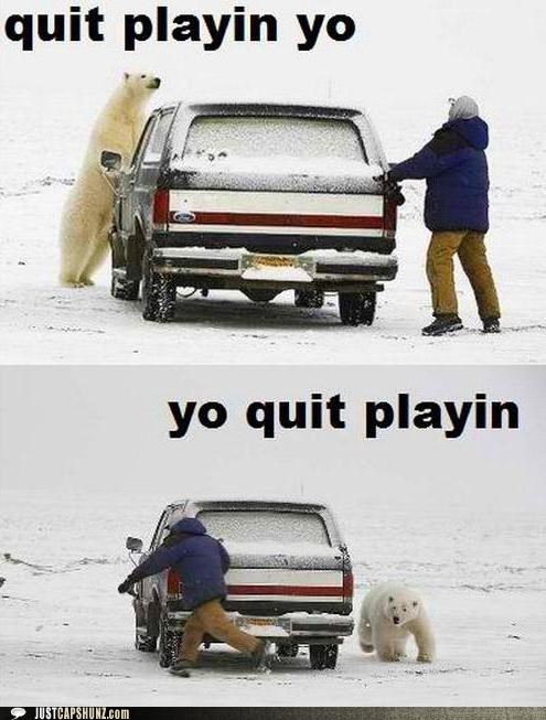 animals car oh crap outdoors playing polar bear quit playin snow stop messing around wild animal wilderness - 5378287616