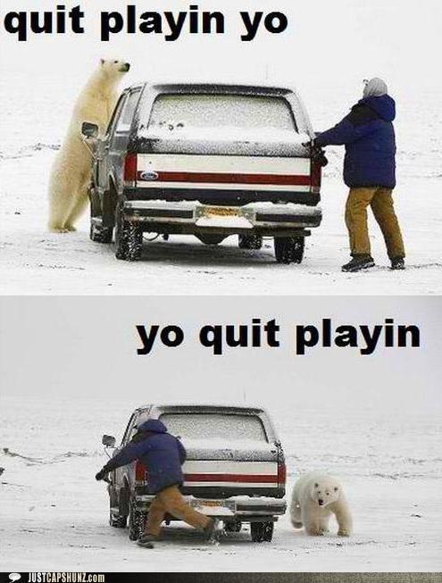 animals car outdoors playing polar bear snow - 5378287616