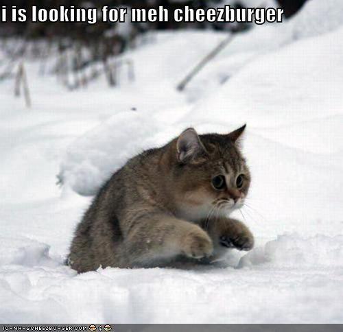 Cheezburger Image 5378393600