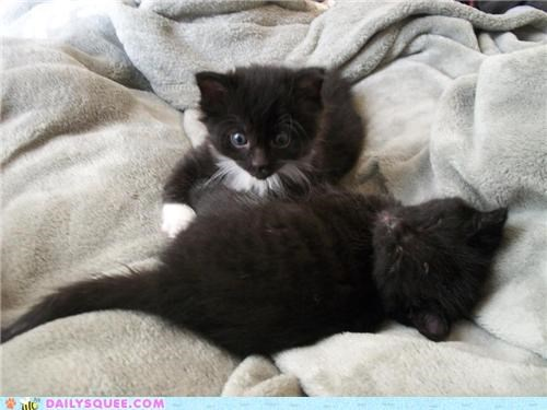 adoption baby cat Cats found Hall of Fame kitten litter newborn reader squees stray - 5378910464
