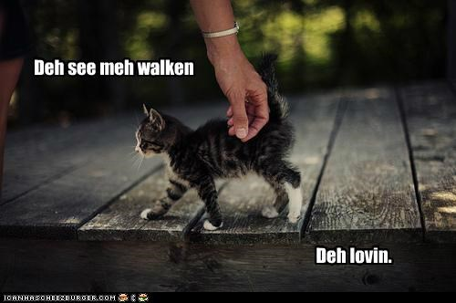 caption captioned cat kitten lolwut loving me meme parody see they walking - 5378958080