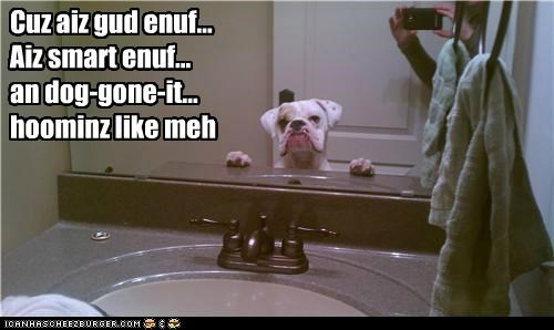 awesome,awesome dog,Badass,BAMF,best of the week,boxer,daily affirmations,Hall of Fame,handsome,mirror