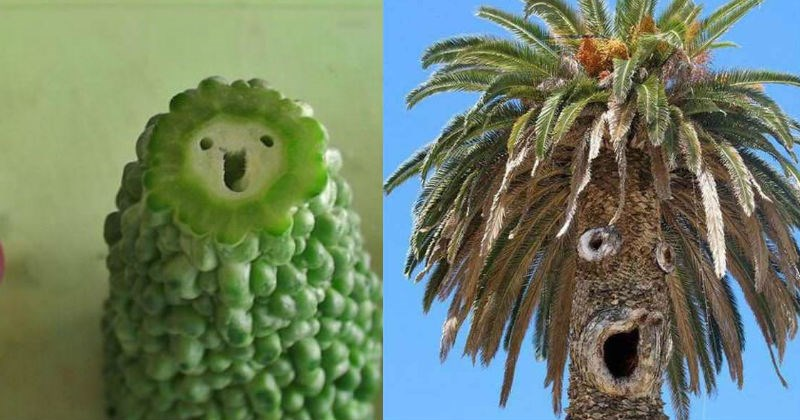 things with faces Faces On Stuff Pareidolia coincidence funny faces - 5379333