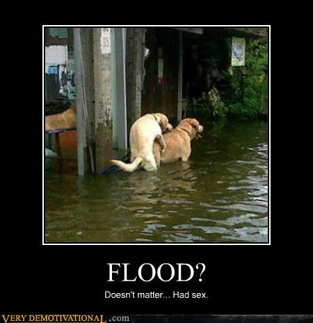 animals dogs flood hilarious humping sexy times - 5379482624