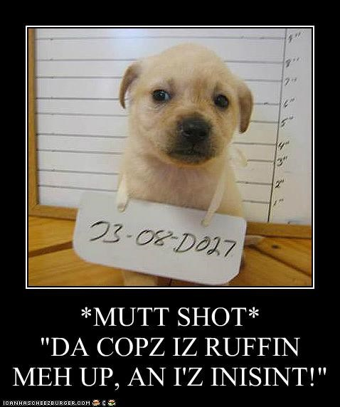 "*MUTT SHOT* ""DA COPZ IZ RUFFIN MEH UP, AN I'Z INISINT!"""
