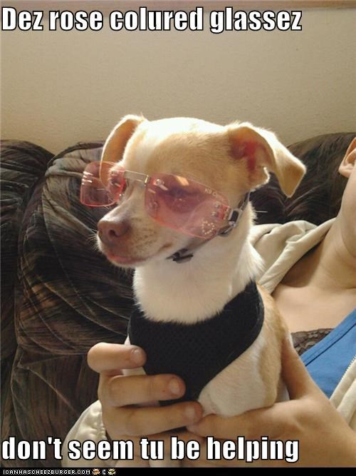 attitude chihuahua glasses optimistic pessimistic point of view rose colored rose colored glasses state of mind sunglasses - 5379509248