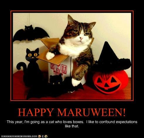 boxes caption captioned decorations halloween maru meowloween - 5379529216
