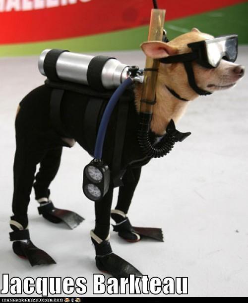 chihuahua jacques barkteau jacques cousteau oceanographer scuba scuba diving swimming wetsuit - 5379579904