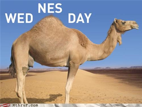animals,camel,graph,wednesday,work