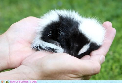 adorable anomaly baby curled up cute disagree Hall of Fame misconception skunk sleeping stereotype tiny true story - 5380361216