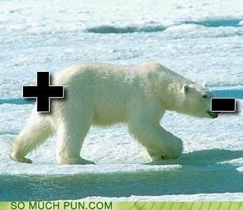 bear double meaning literalism minus plus polar polar bear polarity poles bad puns - 5381395712