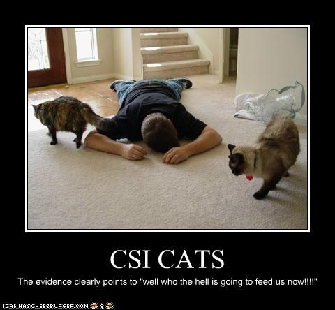 csi calico caption captioned cat Cats crime dead evidence himalayan human question reenactment upset - 5381540608