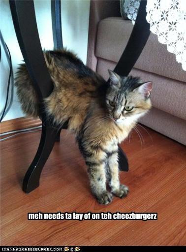 Cheezburger Image 5381593344