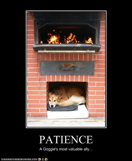 PATIENCE A Goggie's most valuable ally...