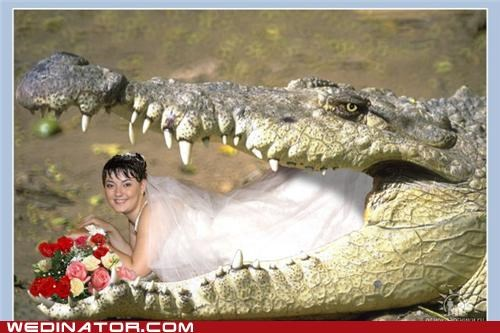 bride,alligator,photoshop,weird