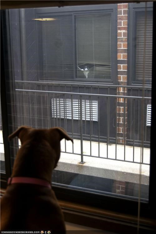 dogs goggies goggies r owr friends Interspecies Love voyeurs watching windows - 5382194688