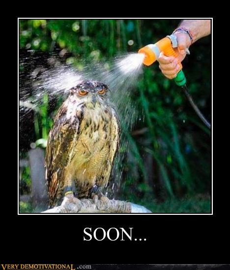 angry animals Hall of Fame hawk hilarious SOON - 5382297088