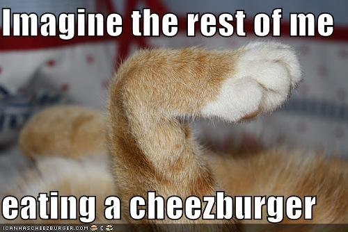 Cheezburger Image 5382424832