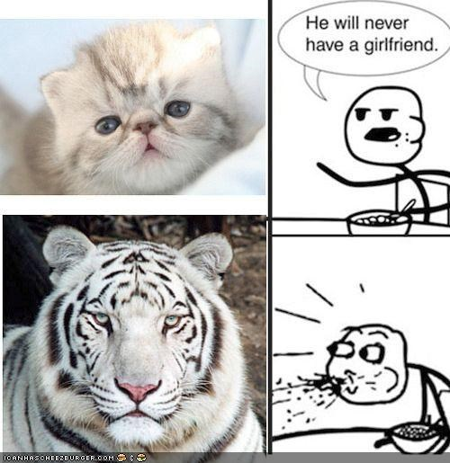 cereal guy,girlfriends,grown up,handsome,kitten,memecats,Memes,tigers