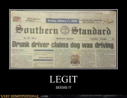 dogs driving drunk hilarious news - 5382849536