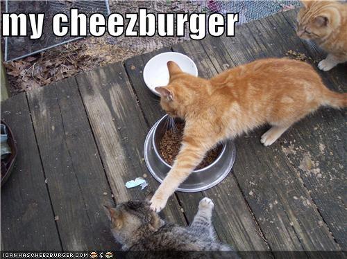 Cheezburger Image 5382978816