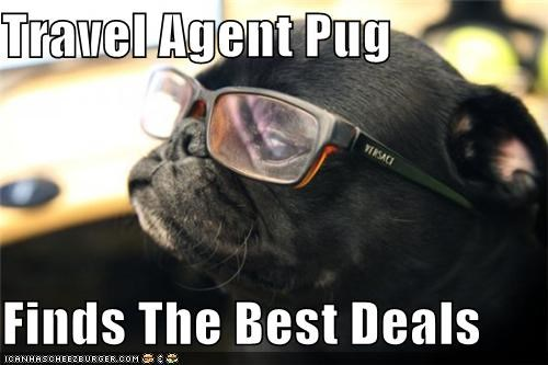 deals,exotic locations,glasses,on sale,pug,sight,Travel,travel agent,traveler,traveling,trip,vacation