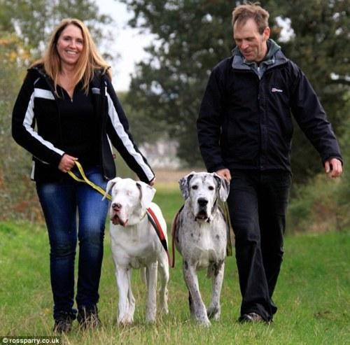 Adopt These Dogs,Dogs Trust Shrewsbury,great dane,lily