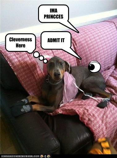 Cheezburger Image 5383434240