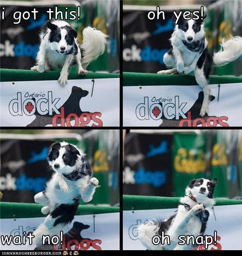 agility athlete best of the week border collie bummer crap falling Hall of Fame i got this no oh crap oh no oh snap oh yes oops sports thats-a-bummer-man wait no