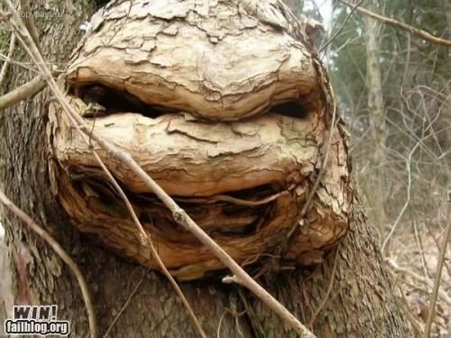mother nature ftw,nature,nerdgasm,TMNT,totally looks like,tree