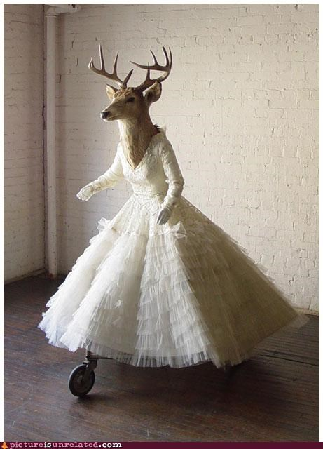 deer,wedding dress,wife,wtf