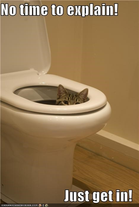 caption captioned cat explain get Hall of Fame in just meme no peeking time TO toilet - 5383923456
