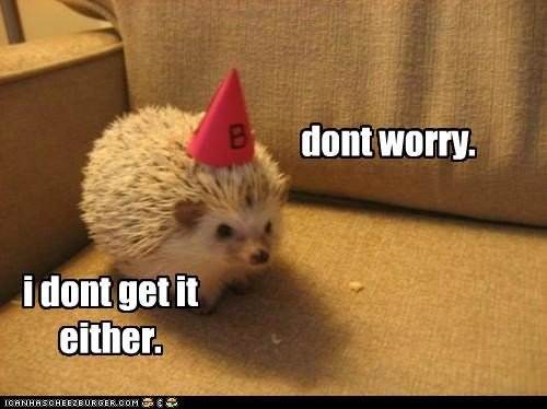 caption,captioned,confused,dont,hat,hedgehog,idgi,lolwut,worry