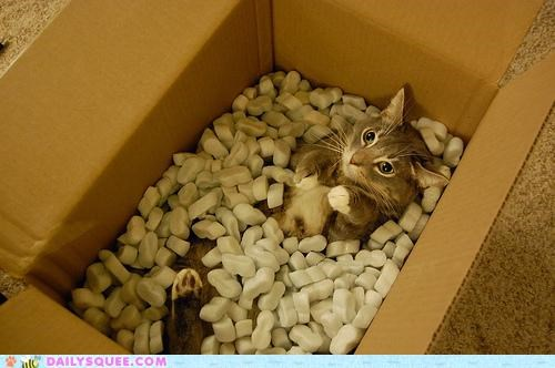 acting like animals box cat Hall of Fame impression lolwut ming vase packing styrofoam - 5384861184