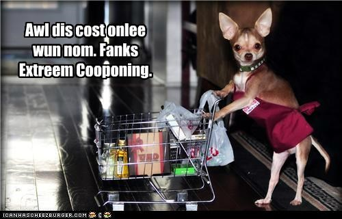 chihuahua coupon couponing coupons extreme couponing groceries grocery shopping grocery store shopping - 5385783552