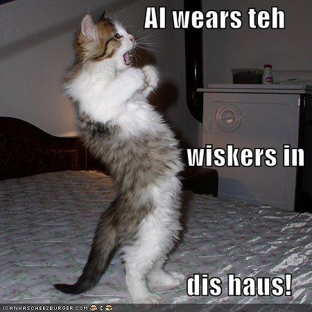cat funny I Can Has Cheezburger - 5386015744
