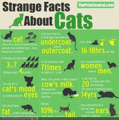 charts facts infographics information strange