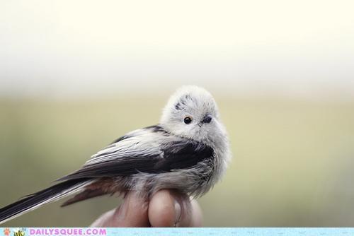beautiful beauty bird extraordinary perching pretty whatsit whatsit wednesday - 5386545920
